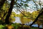 River Cree Spring 2